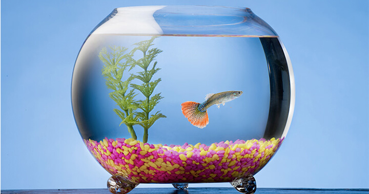Top 10 Best Glass Fish Bowl Reviews