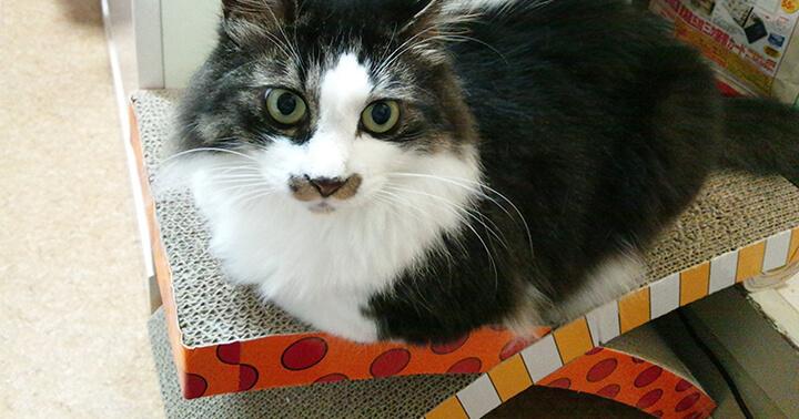 Top 10 Best Cat Scratching Posts Reviews