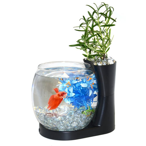 Elive Betta Fish Bowl & Planter