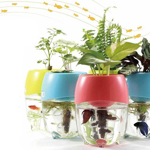 Aquaponic Fish Tank